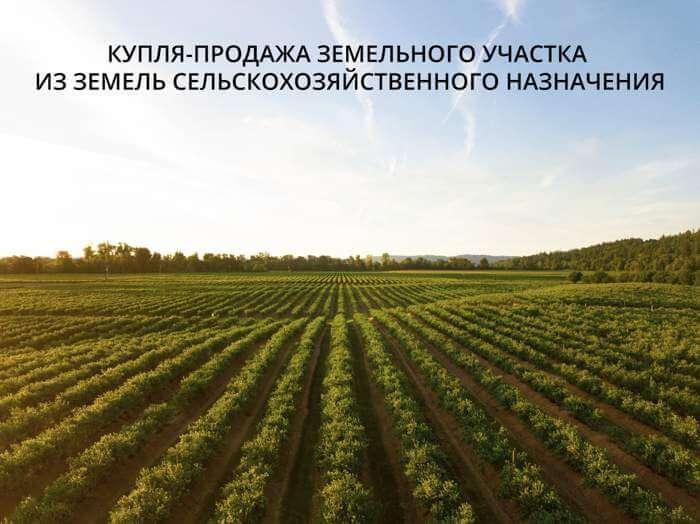 kuplya-prodazha-zemelnogo-uchastka-iz-zemel-selskohozyajstvennogo-naznacheniya